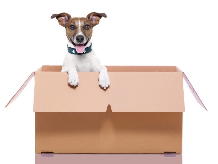 verhuizen met hond