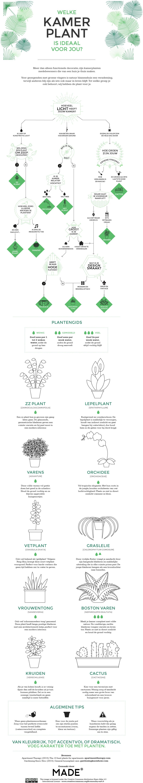 welke plant past bij mij