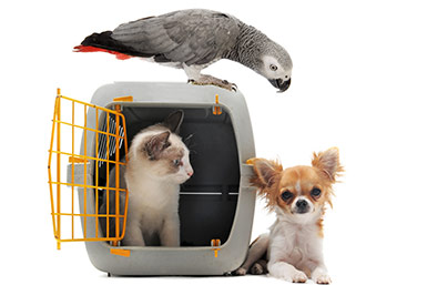 huisdieren verhuizing